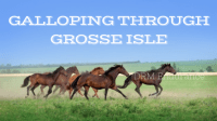 Galloping Through Grosse Isle August 7 - 8