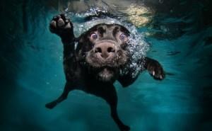Logopedie blog onder water zwemmen