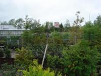 Stedsegrønt hos Ringsted Planteforum