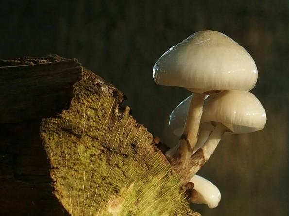 paddenstoelen veluwe speulderbos
