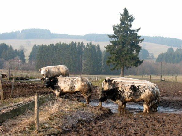 De Ardennen!