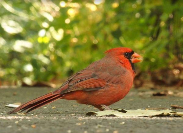 Vogeltje Central Park