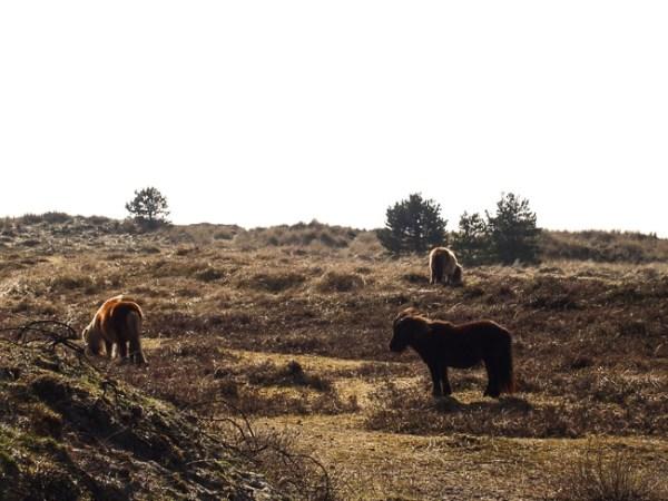 Paarden duinen
