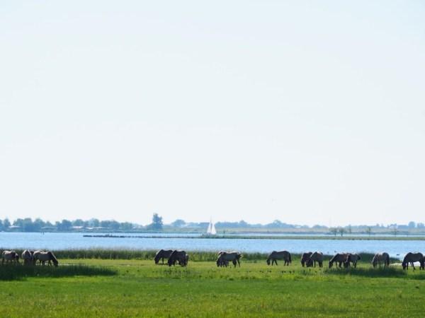 Safari Nationaal Park Lauwersmeer