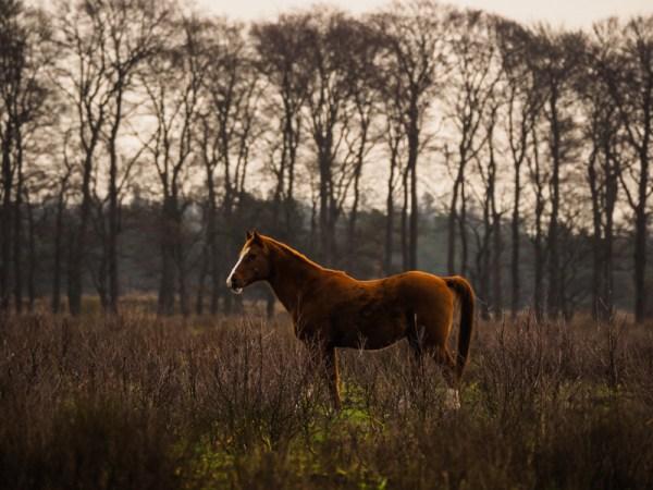 Pony's Planken Wambuis