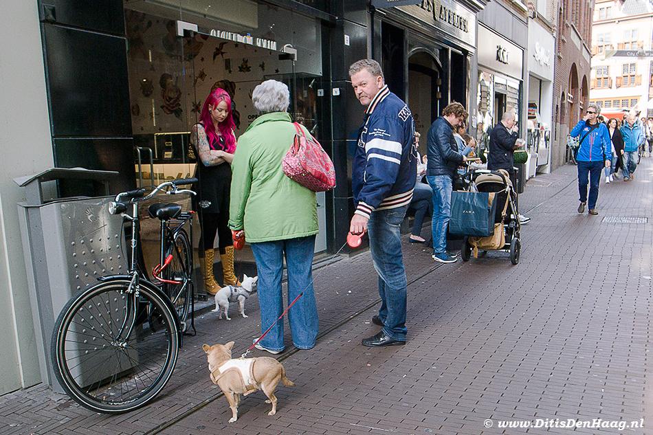 Dog on a Leash The Hague street photography
