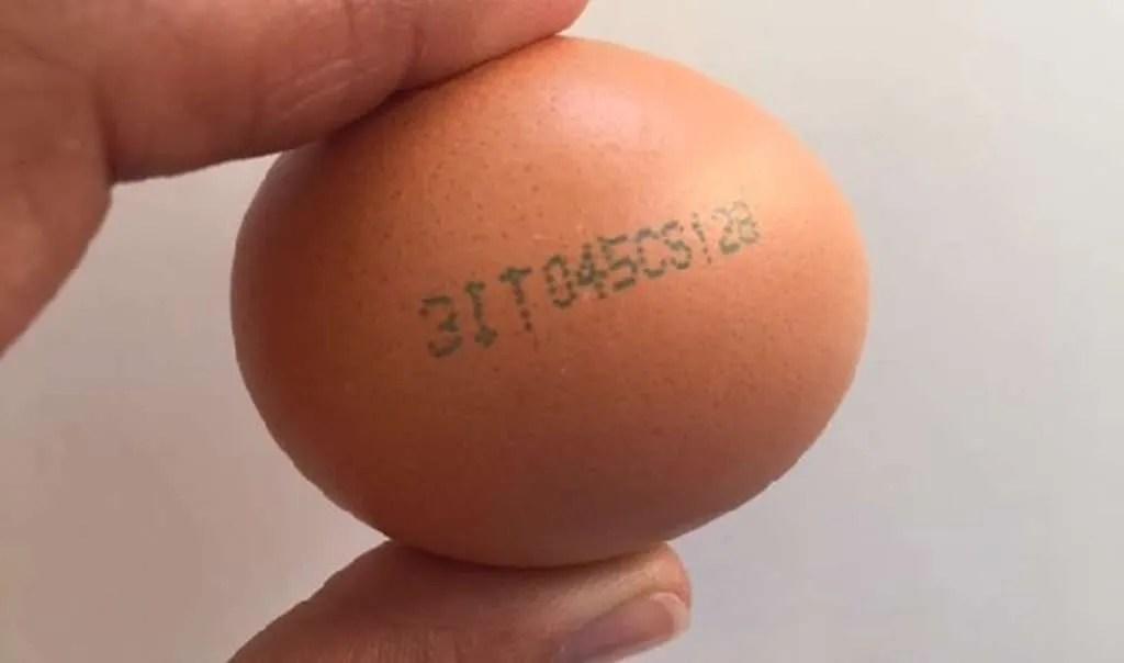 Le uova - un ingrediente, 1000 idee - di tutti i sapori