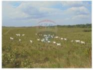 Las 610 hectáreas destinadas para ese fin están cerca de predios de ganaderos. Foto: Mitula
