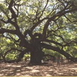 Our Visit to Angel Oak Tree