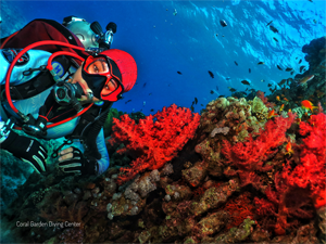 Red corals in Red Sea