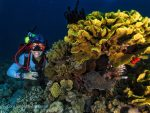 Cabbage coral and girl diver red sea aqaba