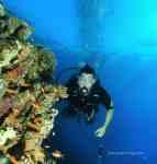 Antias fishes red sea aqaba