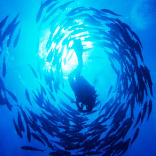Dive with jacks in the Southern Red Sea - photo copyright of Egypt Tourism [photographer: CHICUREL Arnaud/hemis.fr]