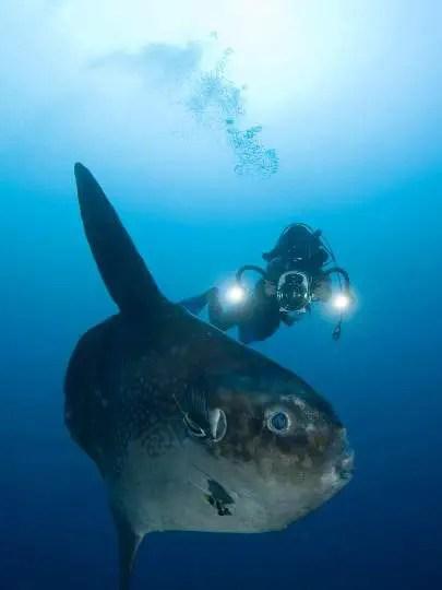 Bali Diving Indonesia