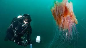 Noordzee duiken diveteam divearound