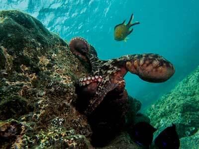 Récif Maison, plongée, Dive College Lanzarote, Playa Blanca