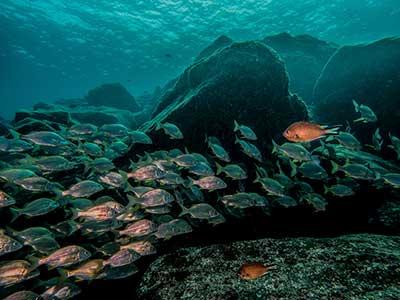 Montaña Roja Riff, tauchen, Dive College Lanzarote, Playa Blanca