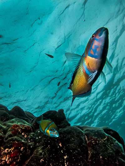 Schnorcheln Dive College Lanzarote
