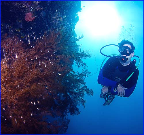Diving Kupang Indonesia