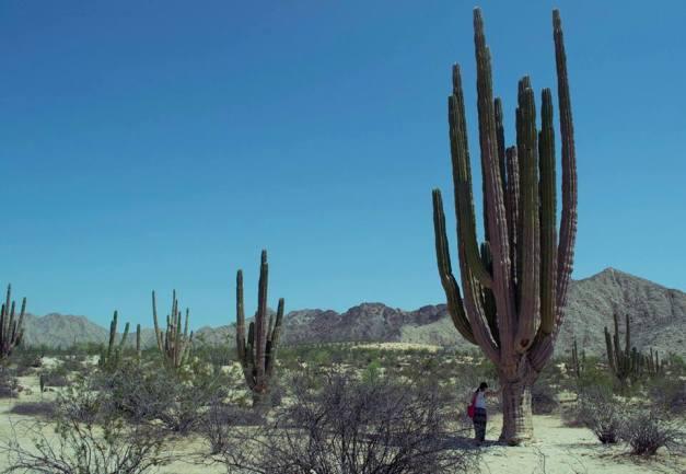 Cactus giganti - Foto by Juan Pablo