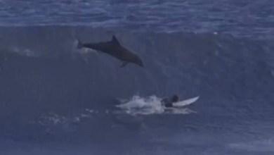דולפין וגולש באוסטרליה