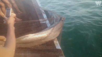 דייגים מצילים דולפין מרשת