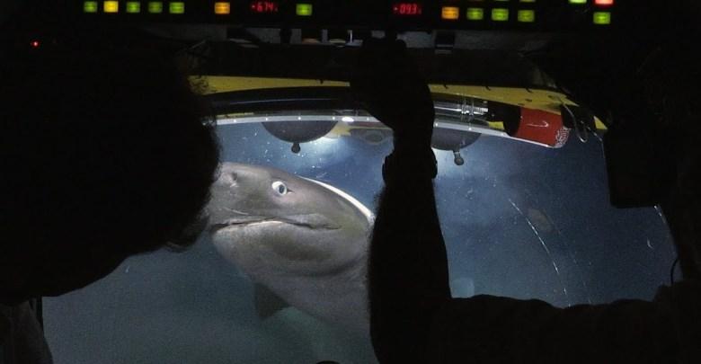Blue Planet II - BBC כרישים תוקפים צוללת מחקר
