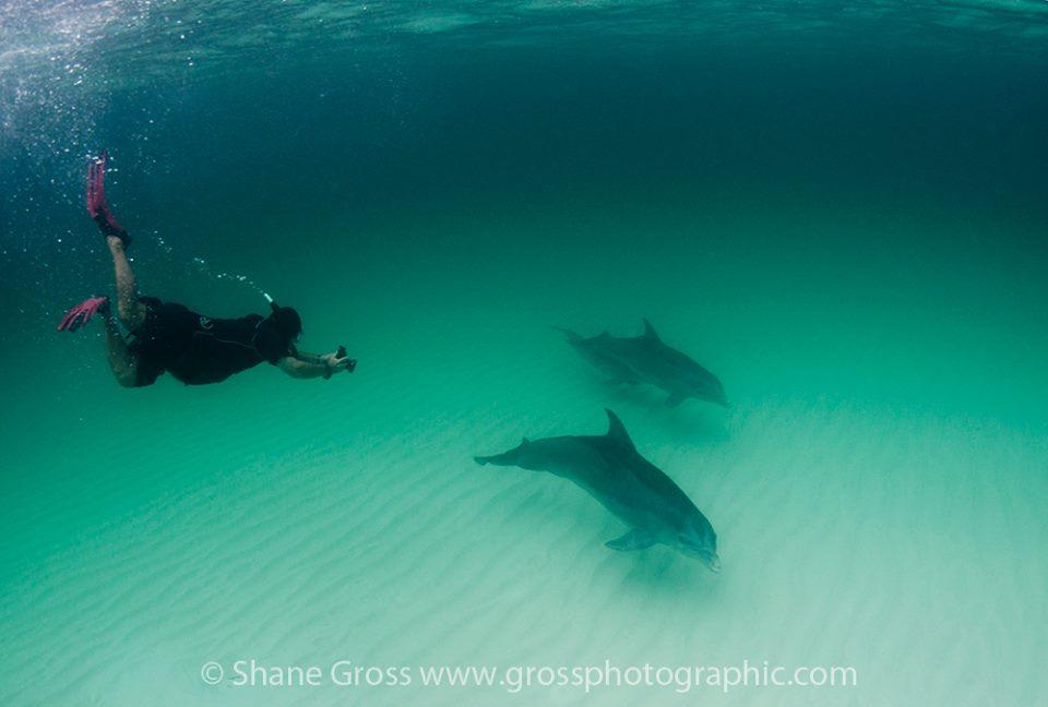 Diving Eleuthera Bahamas Valentines Dive Center