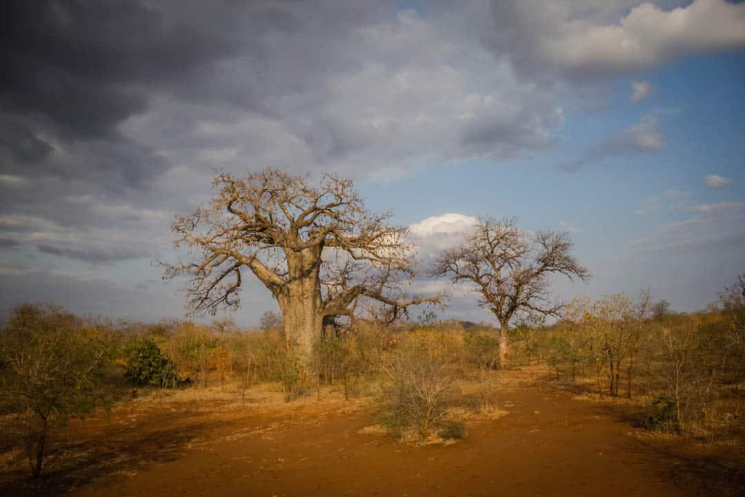 Oasis Overland Tanzania