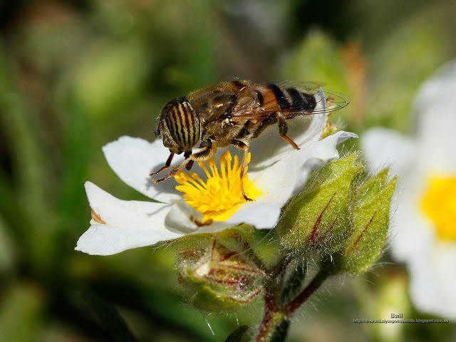fondo de pantalla o wallpaper insecto y flor