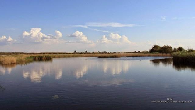 fondo de pantalla del paisaje de un humedal