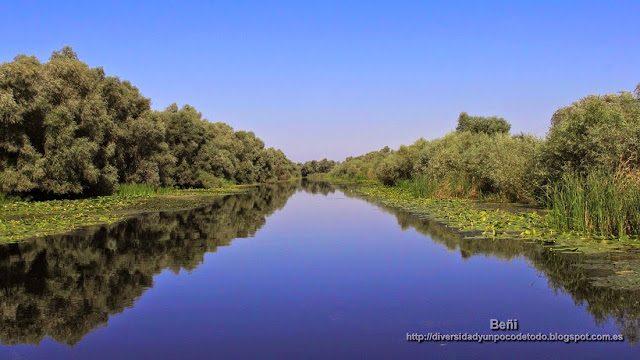 vegetacion flotante en las orillas de un canal del delta del danubio