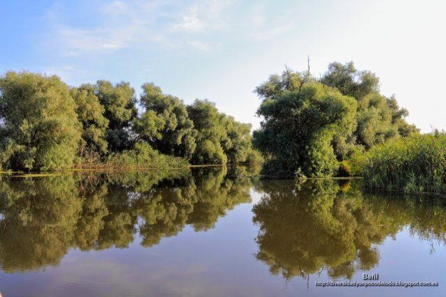 bosque de ribera de los canales del delta del danubio