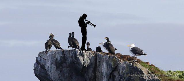 miles davis entre cormoranes