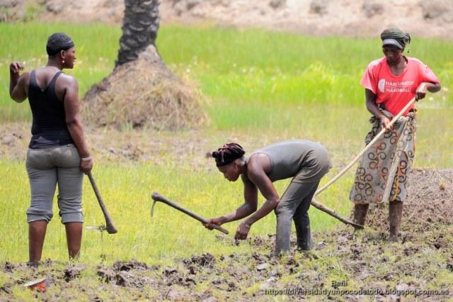 rio gambia, agricultoras labrando la tierra a mono