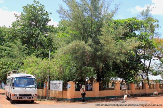 Freedom Tree Monument o el arbol de la Libertad en Janjanbureh