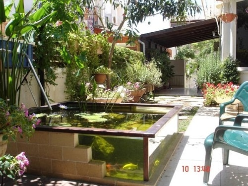 Above Ground Koi Pond