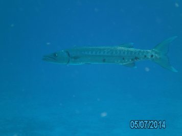 Cozumel Mexico with Diveshack USA May 2014 10