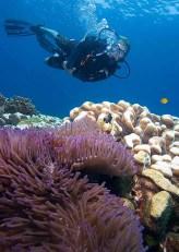 Fun-Diving-Tioman-Island