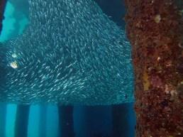 Salang Bay Jetty Dive, Tioman Island