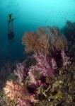 Diving at Chebeh Island, Pulau Tioman