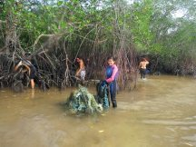 Debris from Mangrove Bay