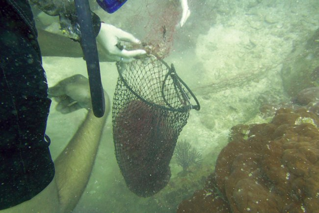 Collecting the removed net