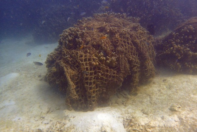 Huge fishing nets smother corals