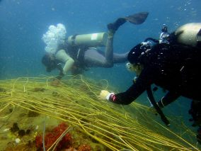 Using Seasnip to remove the net