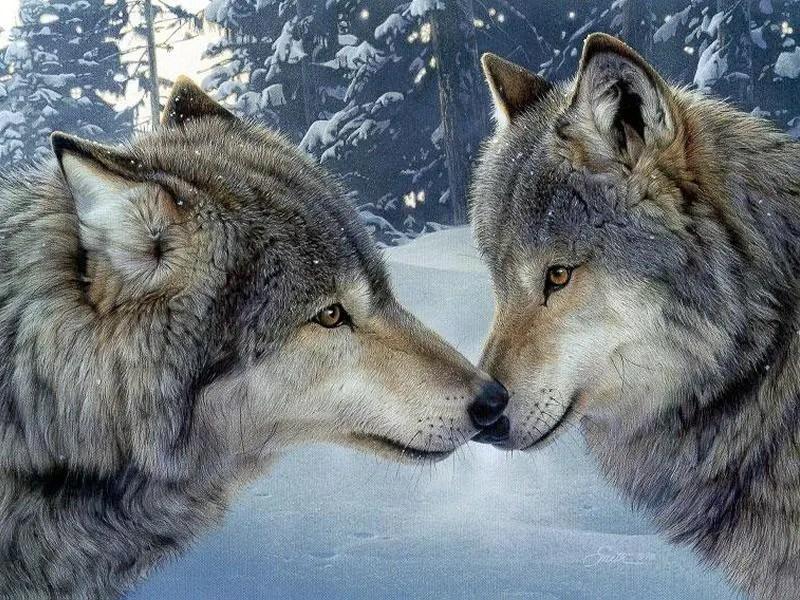 """Résultat de recherche d'images pour """"loup"""""""