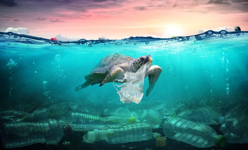 sea turtle threat