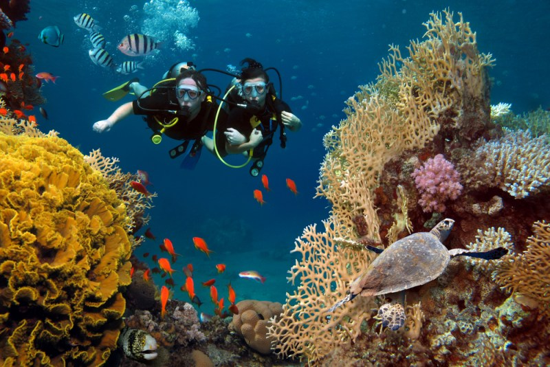 eco-friendly diver