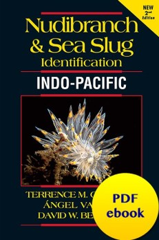 nudibranch-sea-slug-identification-indo-pacific-ebook-pdf-fish-id-marine-life-ebook