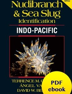 nudibranch-sea-slug-identification-indo-pacific-ebook-pdf-fish-id-marine-life-ebook